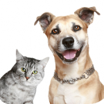 Dog-and-Cat-Transparent-Background