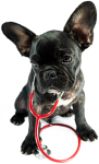 dog-with-stethoscope